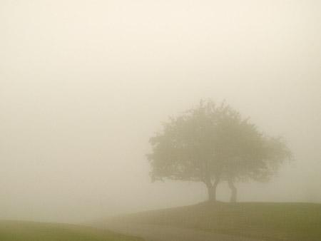 Brouillard-7