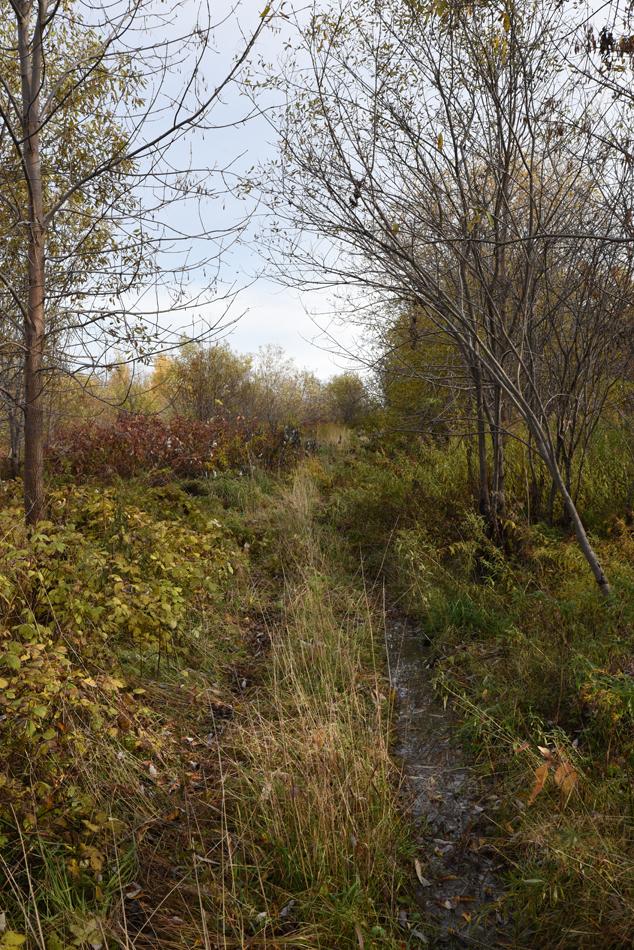 Ruisseau-01