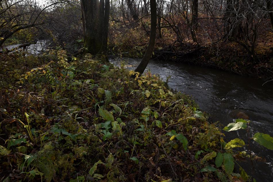 Ruisseau-15