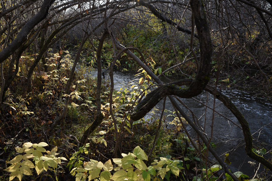 Ruisseau-16
