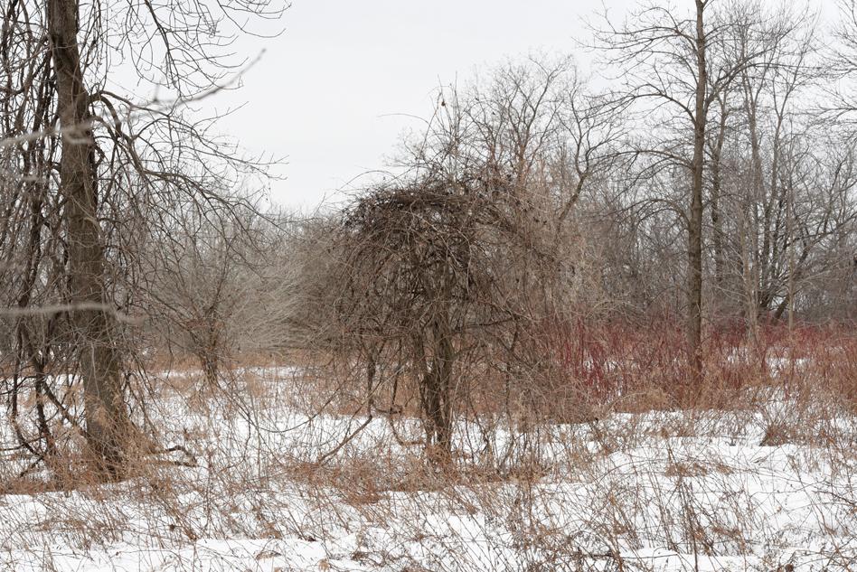 Dans le bois-01