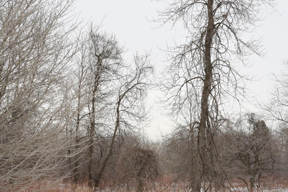 Dans le bois-03