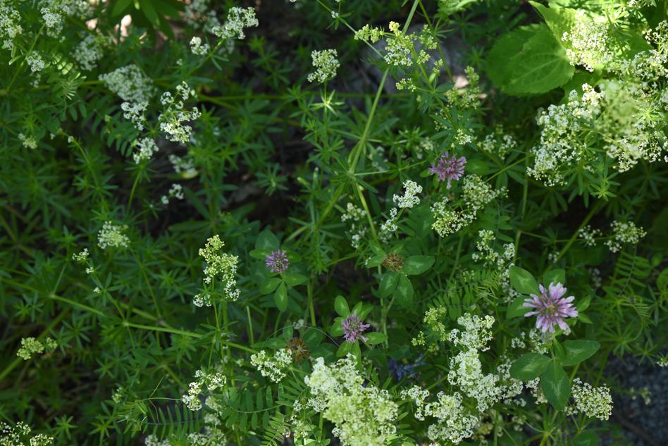fleurs au fleuve-03