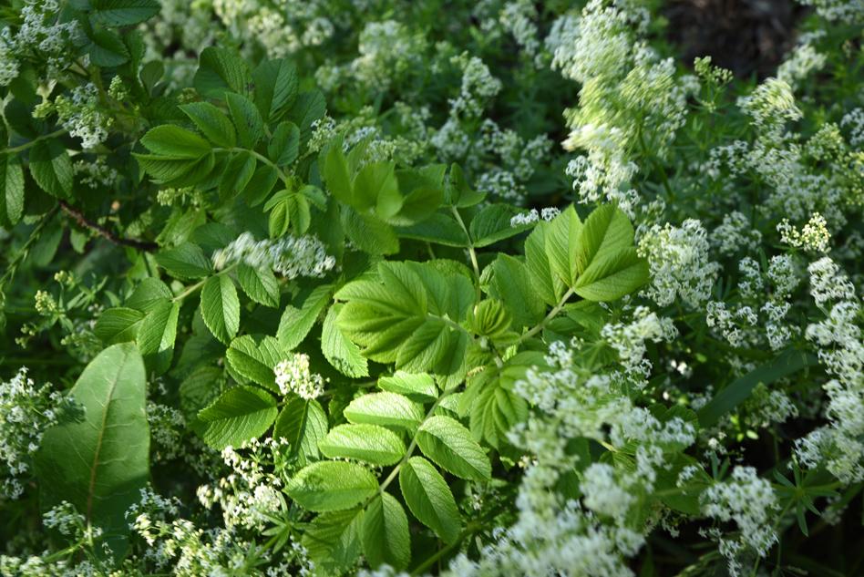 fleurs au fleuve-05