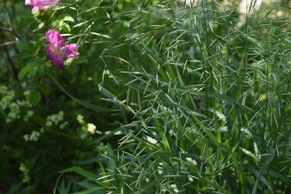 fleurs au fleuve-07