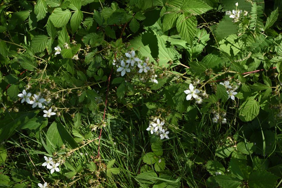 fleurs au fleuve-09