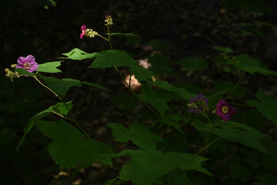 fleurs au fleuve-12
