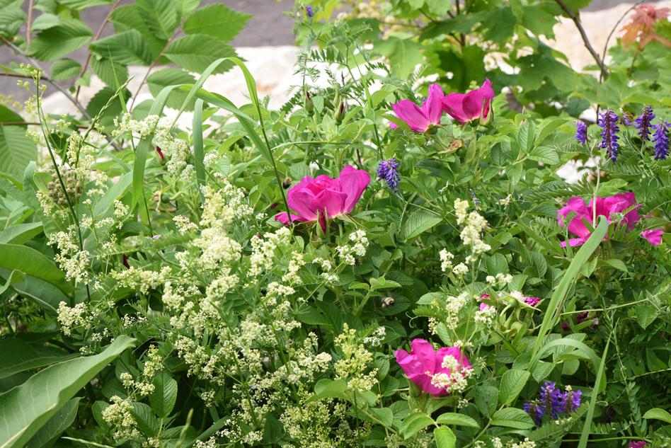 fleurs au fleuve-13