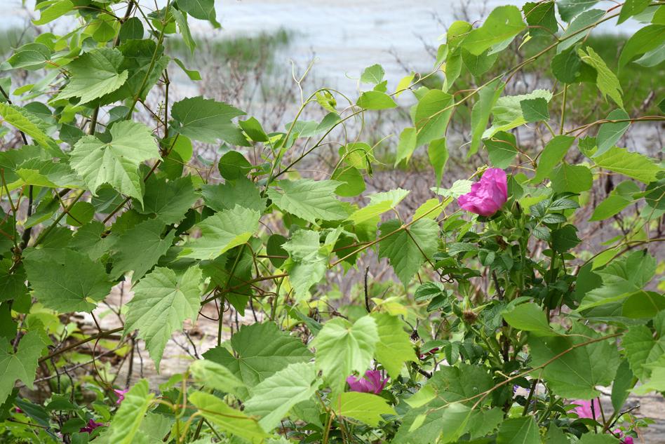 fleurs au fleuve-15
