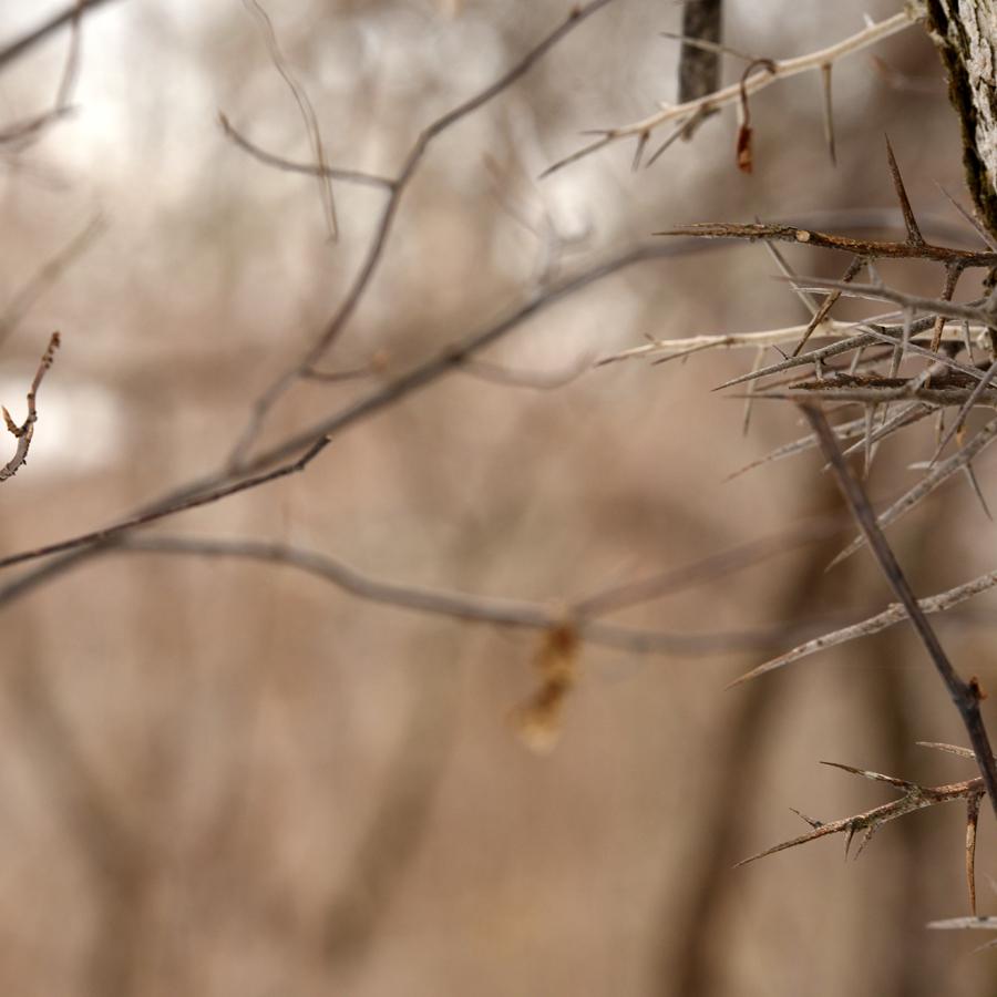 Dans le bois-09